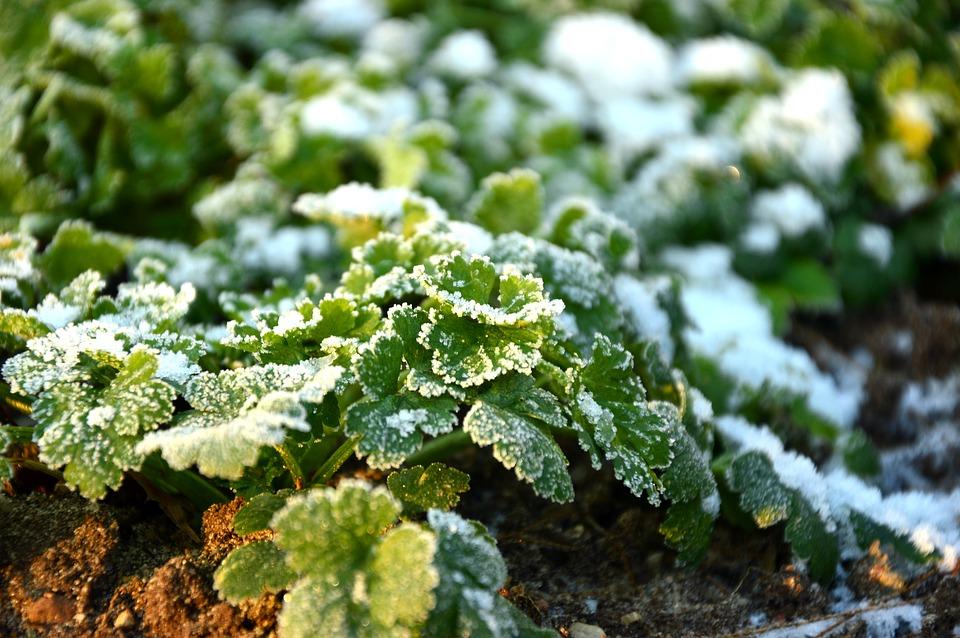 Winterblühende Gartenpflanzen